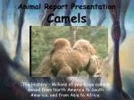 animal report presentation camels