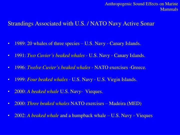 Anthropogenic Sound Effects on Marine Mammals