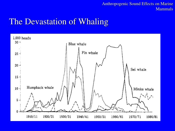 The devastation of whaling