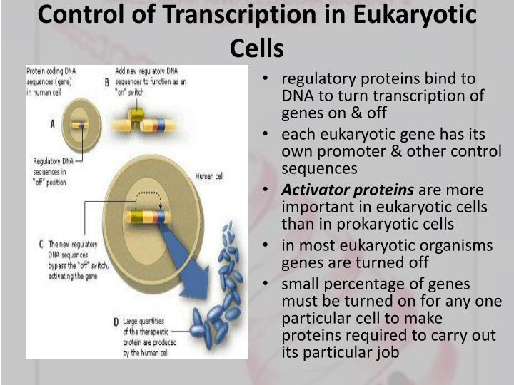Control of Transcription in Eukaryotic Cells
