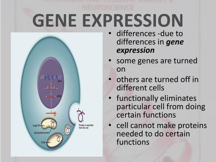 Gene expression1