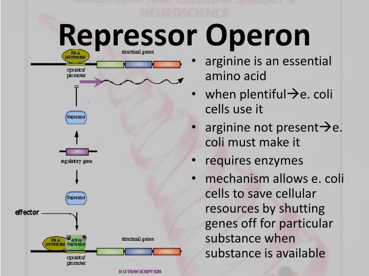 Repressor Operon