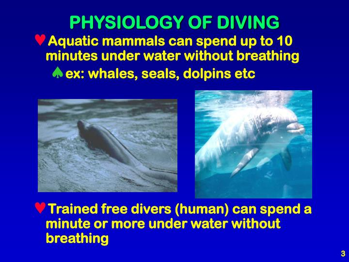 how seals and whales breath underwater How can whales and dolphins hold their breath for so long underwater walruses and seals how do whales hold their breath underwater for so long.