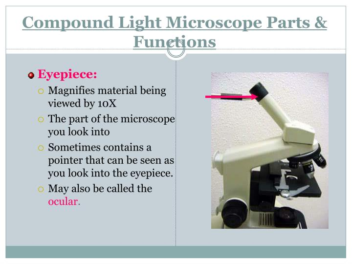 compound light microscope function