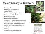 marchantiophyta liverworts