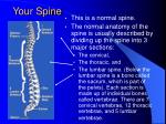 your spine1
