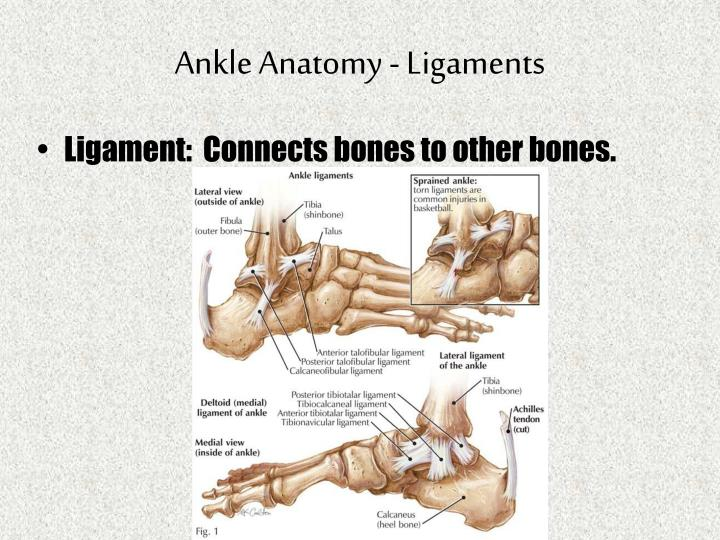 Ppt Foot Ankle Powerpoint Presentation Id1822973