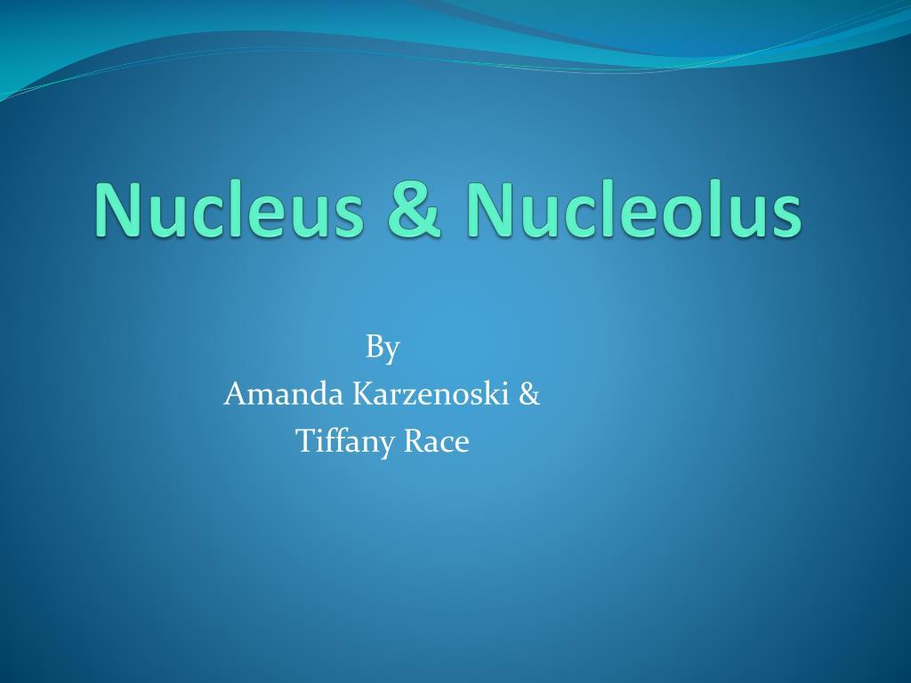 ppt - nucleus  u0026 nucleolus powerpoint presentation