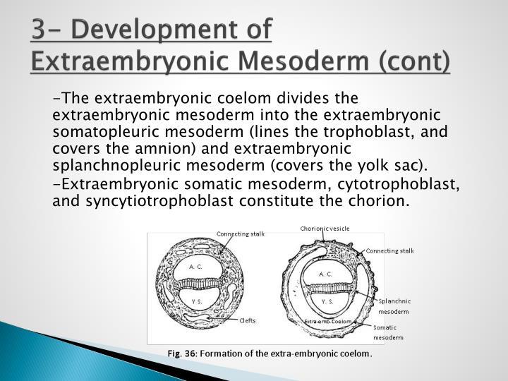 3- Development of