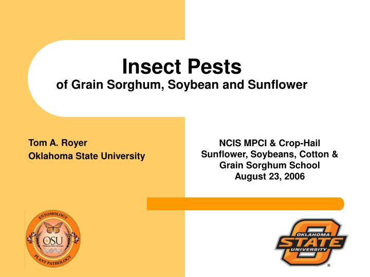 Insect pests of grain sorghum soybean and sunflower
