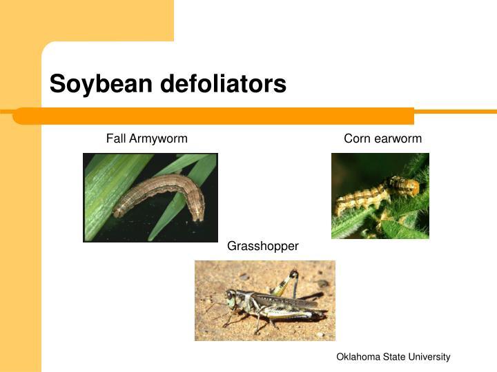 Soybean defoliators