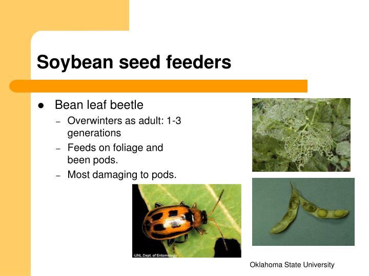 Soybean seed feeders