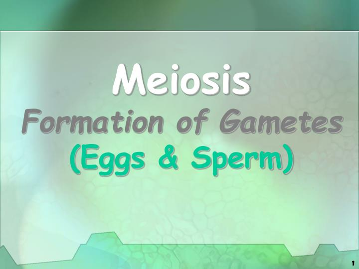 meiosis formation of gametes eggs sperm