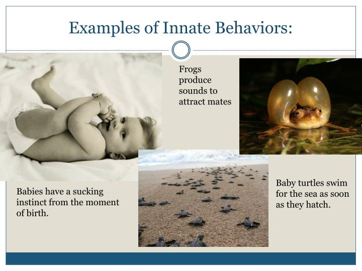 Ppt Animal Behavior Powerpoint Presentation Id1824730