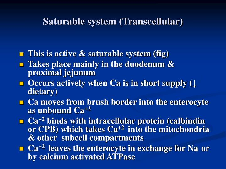Saturable system (Transcellular)