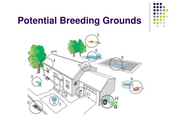 Breeding Grounds