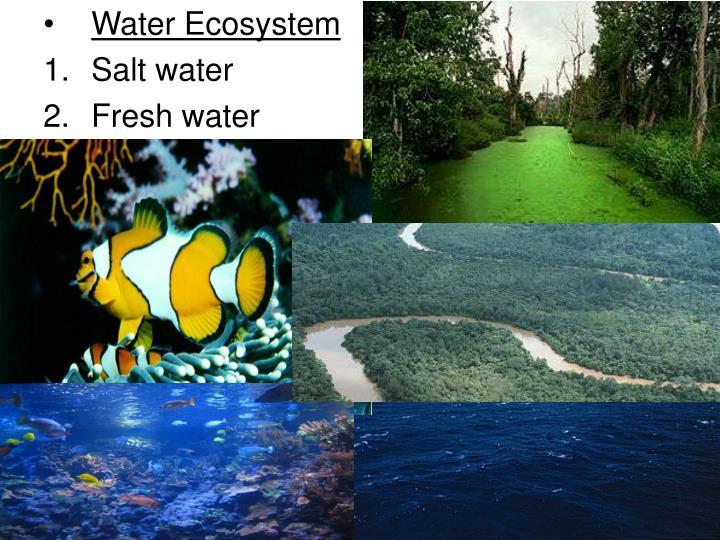 Water Ecosystem