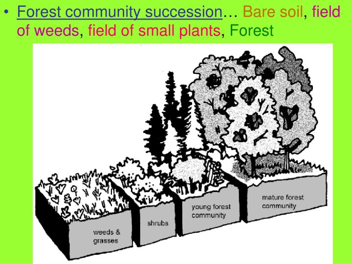 Forest community succession