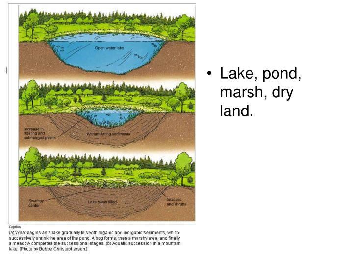 Lake, pond, marsh, dry land.