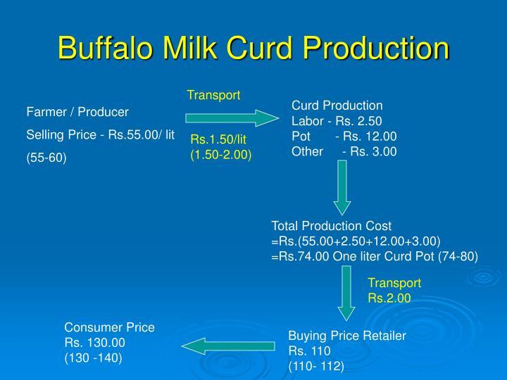 Buffalo Milk Curd Production