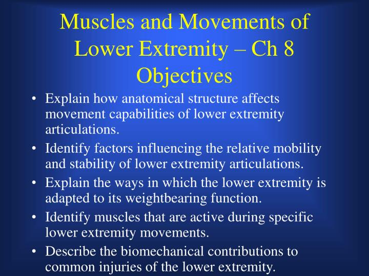 muscles and movements of lower extremity ch 8 objectives n.