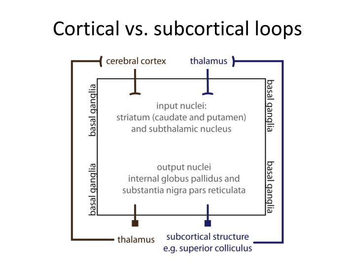 cortical vs subcortical loops n.