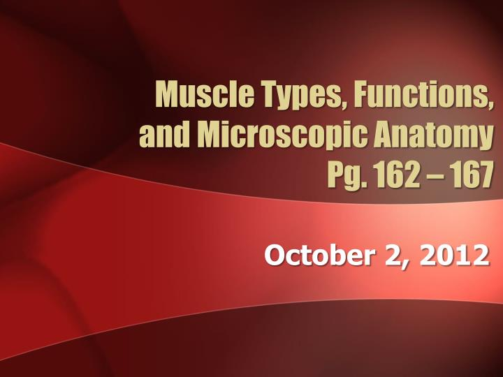 muscle types functions and microscopic anatomy pg 162 167 n.