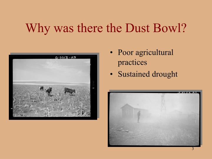 the dust bowl and agriculture essay Essay #2the dust bowl: could we face it againthe dust bowl was a very tragic event for many thousands of america  lifestyles dust bowl brought everlasting effects on the southern plain farmers and the nation as a whole the dust bowl and its consequences had a dramatic effect on.