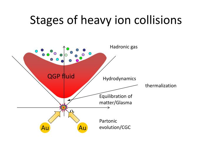 Stages of heavy ion collisions