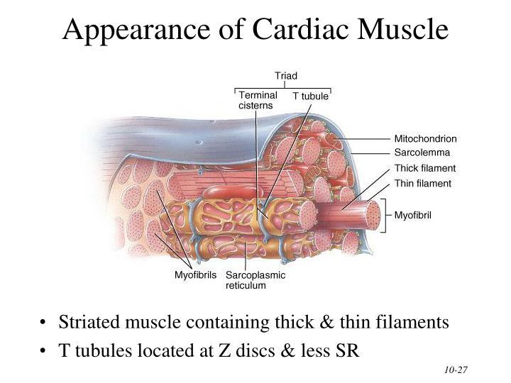 Appearance of Cardiac Muscle