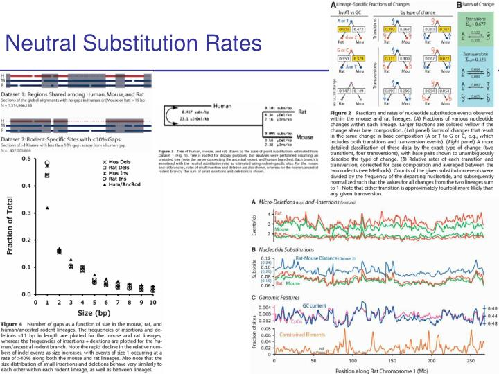 neutral substitution rates n.