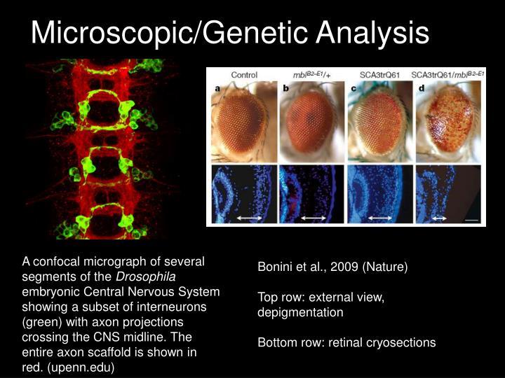 Microscopic/Genetic Analysis