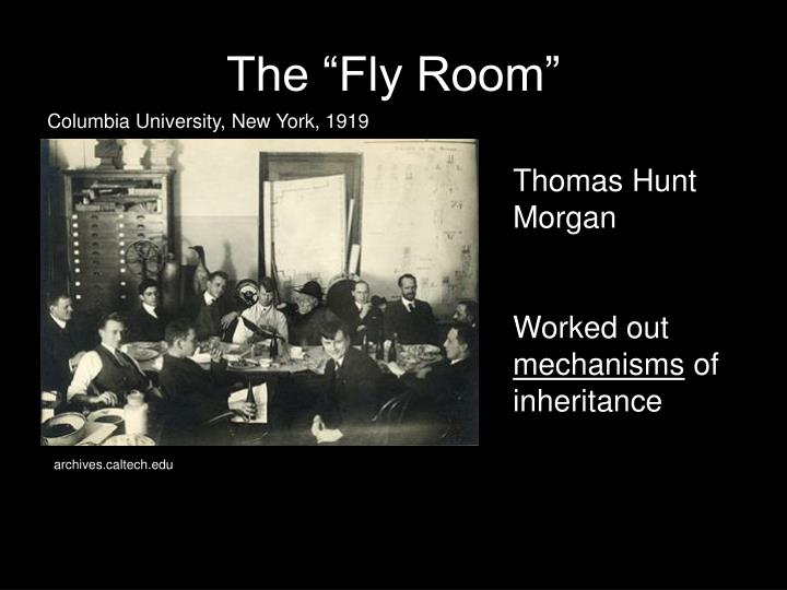 """The """"Fly Room"""""""