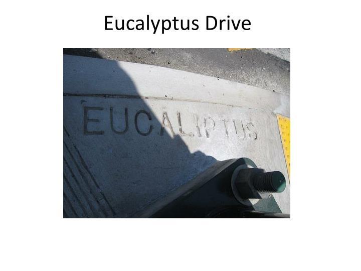 Eucalyptus Drive