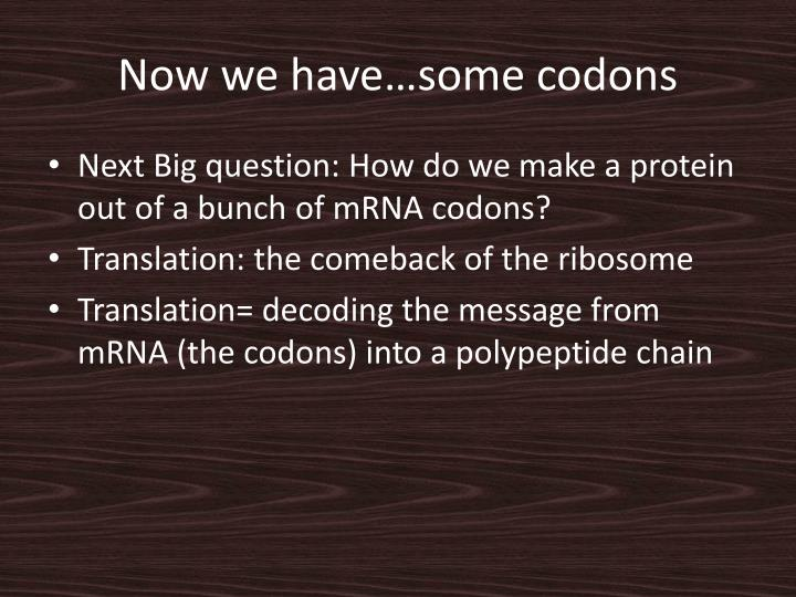 Now we have…some codons