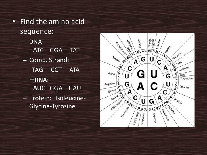 Find the amino acid sequence:
