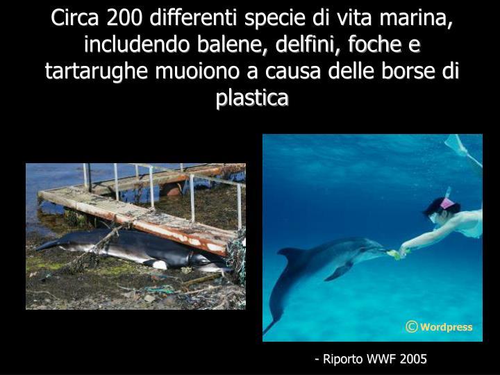 Circa 200 differenti specie di vita marina, includendo balene, delfini, foche e tartarughe muoiono a causa delle borse di plastica