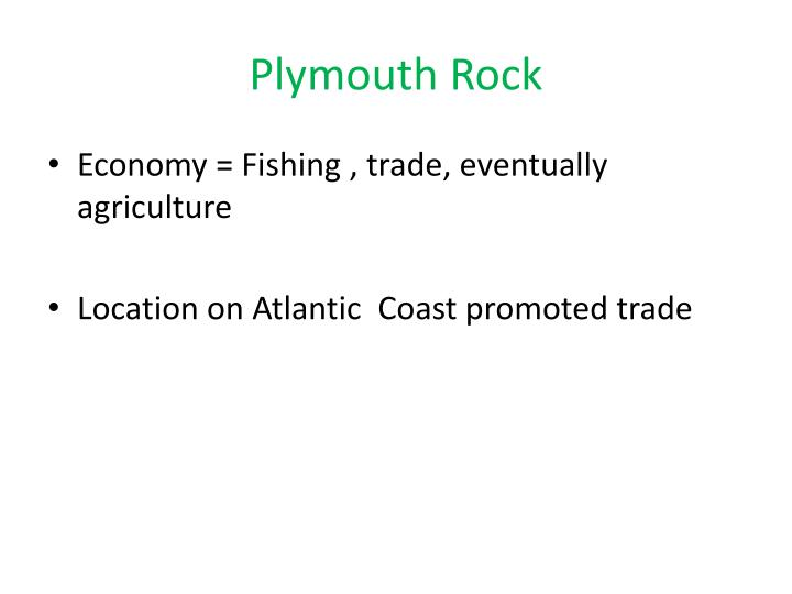 Plymouth rock1