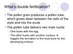 what s double fertilization