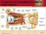 cranial nerves controlling the extra ocular muscles