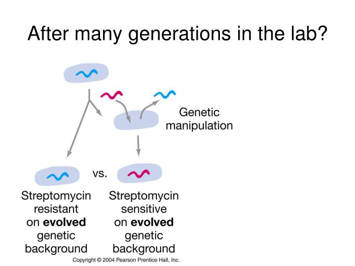 After many generations in the lab?