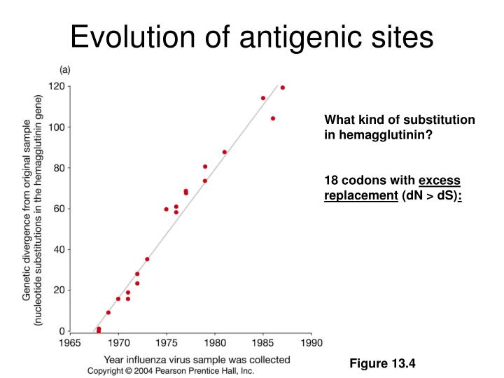 Evolution of antigenic sites