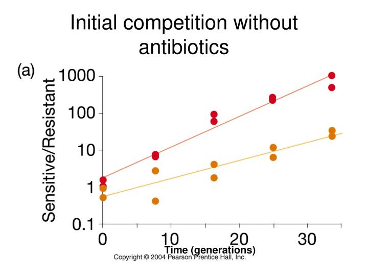 Initial competition without antibiotics