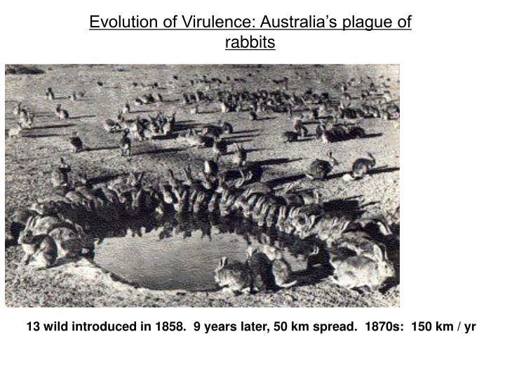 Evolution of Virulence: Australia's plague of rabbits