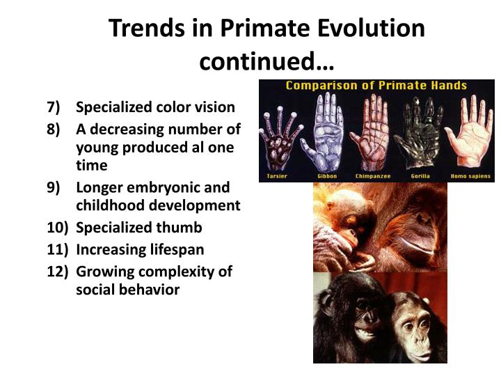 primate evolution essay Get even a better essay we will write a custom essay sample on evolution of primate intelligence topics specifically for you order now.