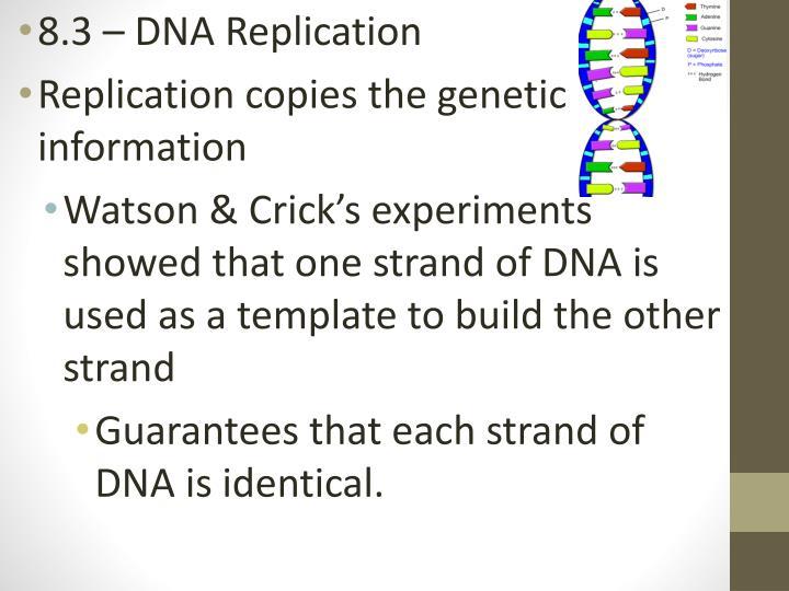 8.3 – DNA Replication