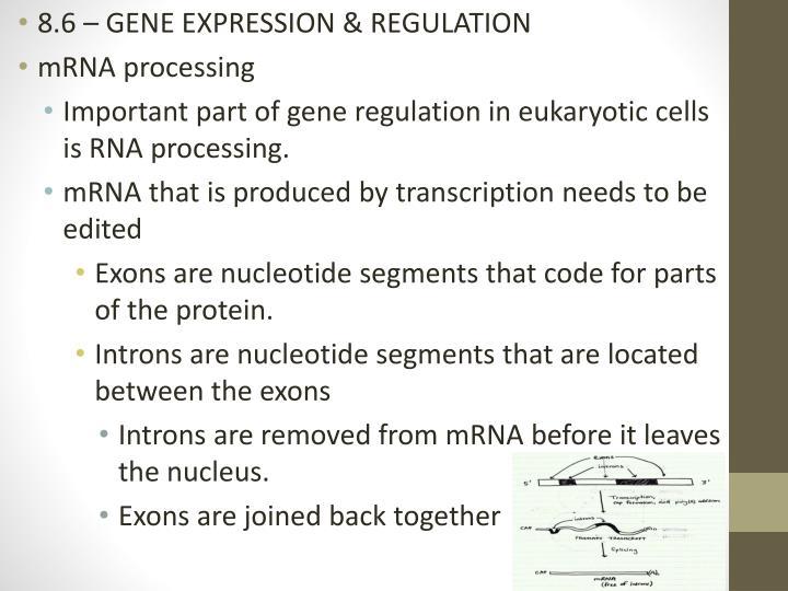 8.6 – GENE EXPRESSION & REGULATION