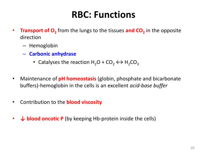 the function of erythrocytes
