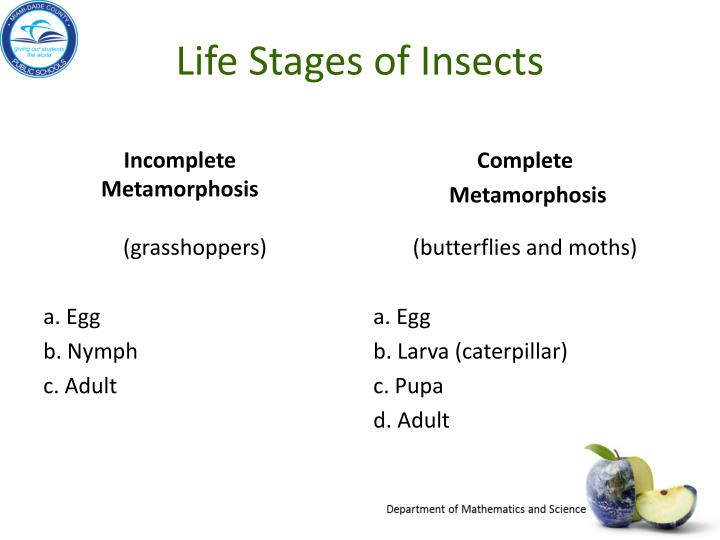 Life Stages of Insects