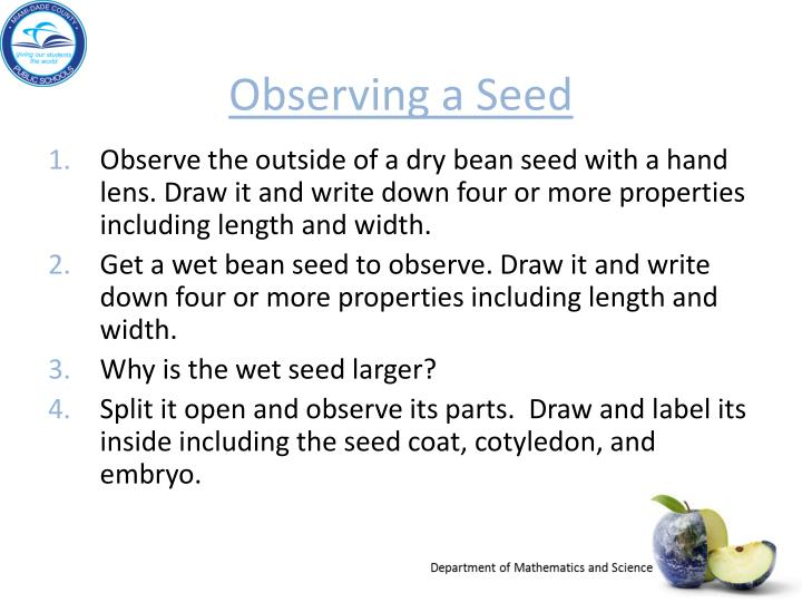 Observing a Seed